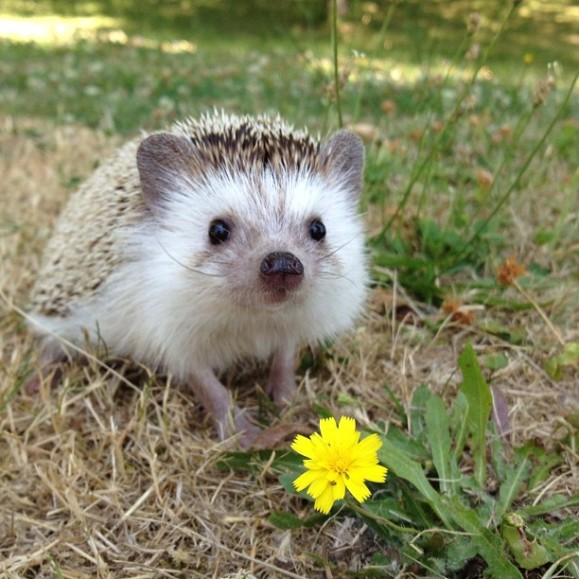 An instagram dedicated to a hedgehog. Yes please!
